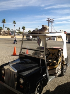 Golf cart of the day.  (Notice the stuffed animal on the top)