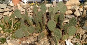 Very thorny cactus