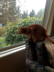 Oscar watching something outside (showing his hunting prowess)
