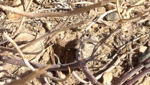 A lizard in the desert.  He's in the center of the photo at the top of the hole.  Pretty good job of camouflage, I think.