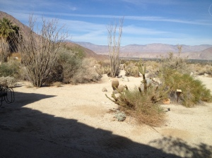 View of the desert from the entrance of the Visitor's Center